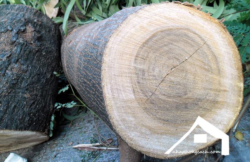 Tìm-hiểu-về-gỗ-keo