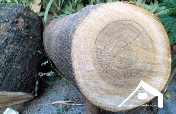 gỗ-bình-linh