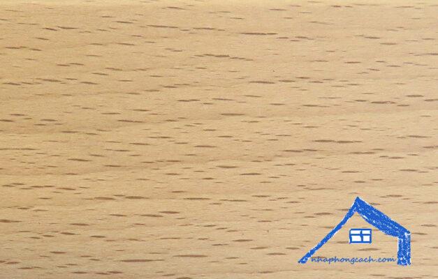 gỗ-beech