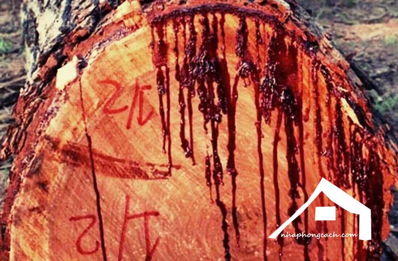 gỗ-huyết-rồng